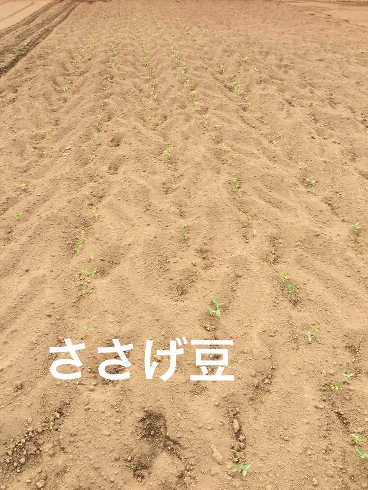 f:id:Yamanao:20180530122005j:plain
