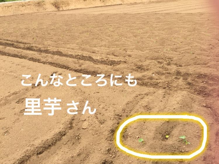 f:id:Yamanao:20180530122019j:plain