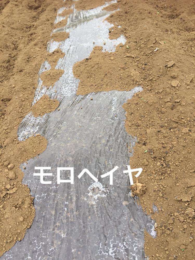 f:id:Yamanao:20180530122030j:plain