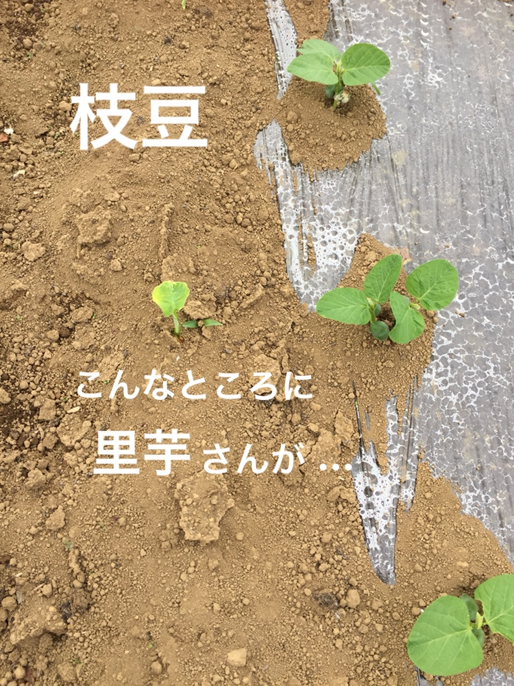 f:id:Yamanao:20180530122042j:plain