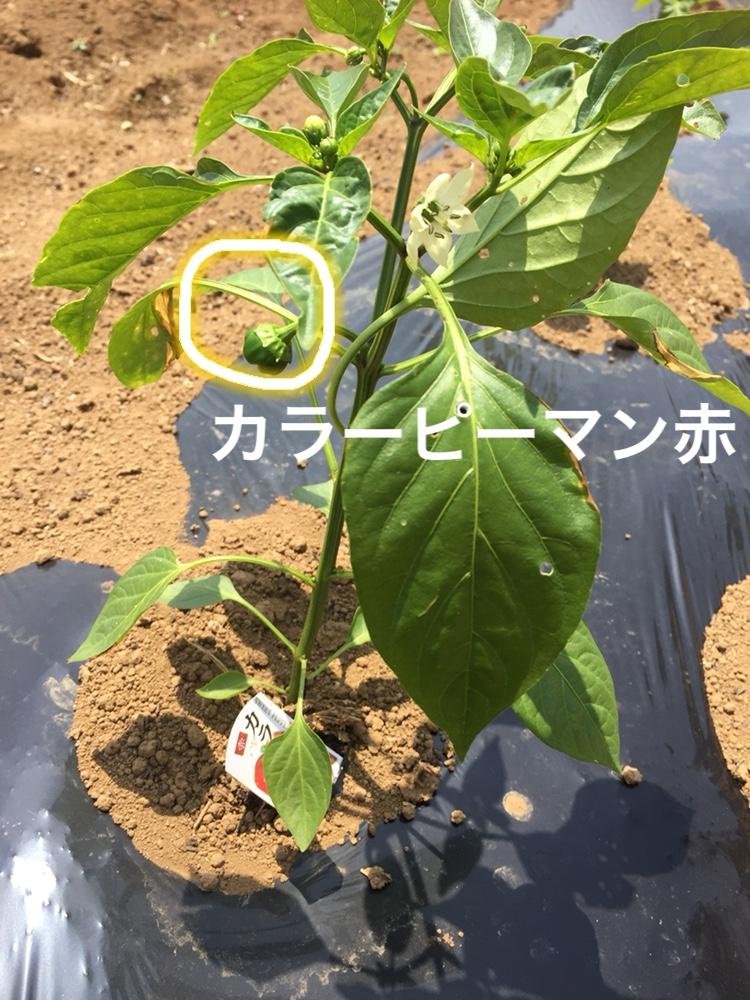f:id:Yamanao:20180530123157j:plain