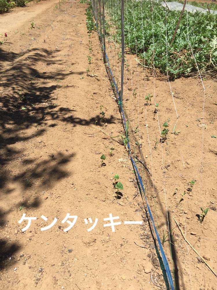 f:id:Yamanao:20180630154900j:plain