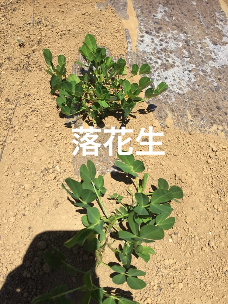 f:id:Yamanao:20180630154920j:plain