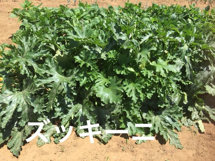 f:id:Yamanao:20180630154947j:plain