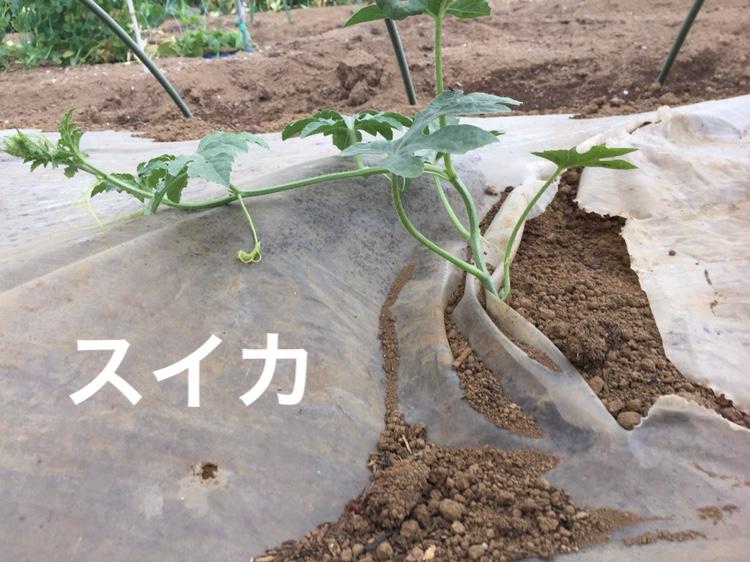 f:id:Yamanao:20180630185219j:plain