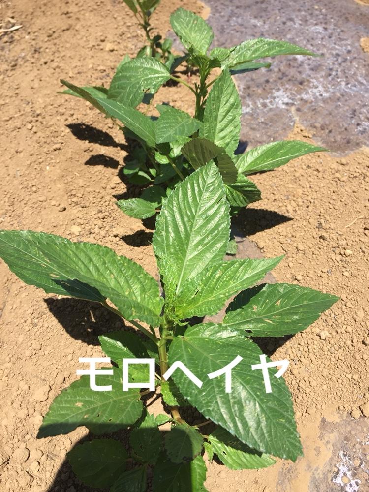 f:id:Yamanao:20180630185230j:plain