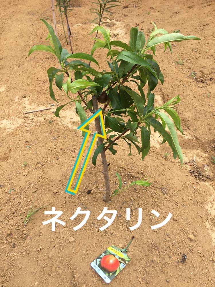 f:id:Yamanao:20180630185528j:plain