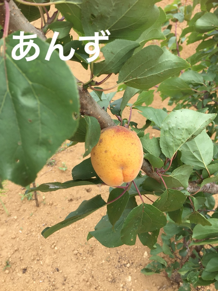 f:id:Yamanao:20180630185555j:plain