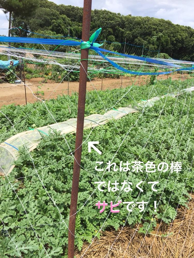 f:id:Yamanao:20180717141001j:plain