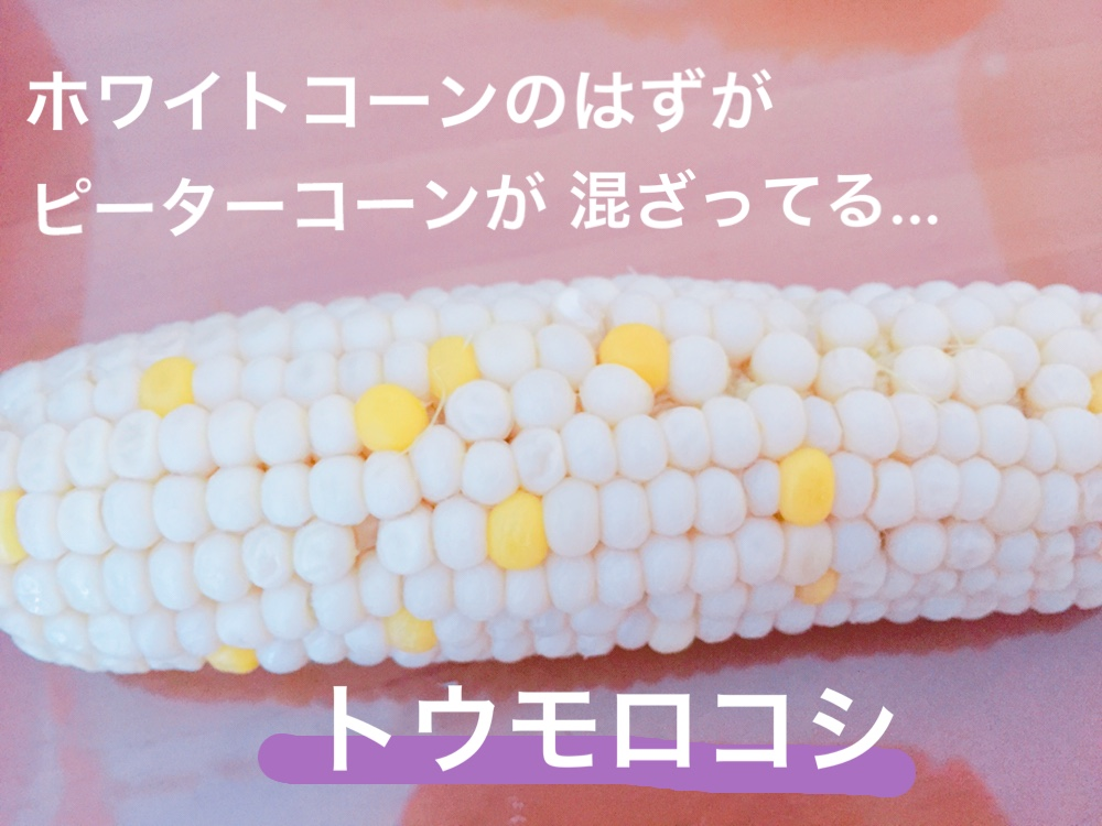 f:id:Yamanao:20180721195332j:plain