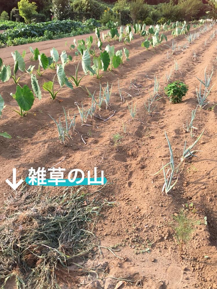 f:id:Yamanao:20180721195413j:plain