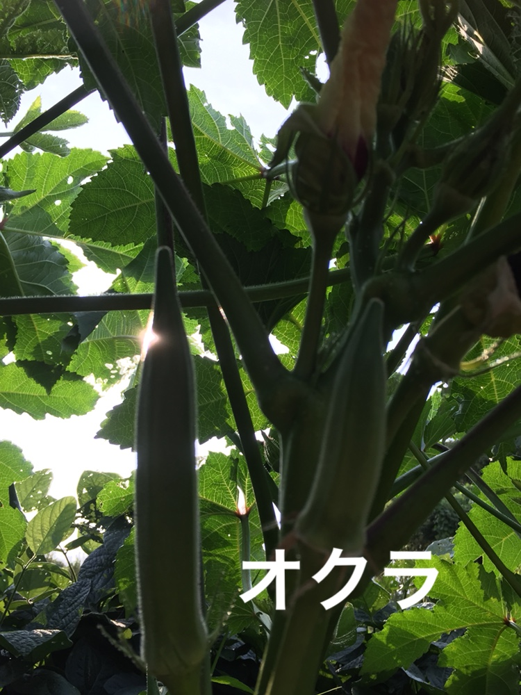 f:id:Yamanao:20180721195451j:plain