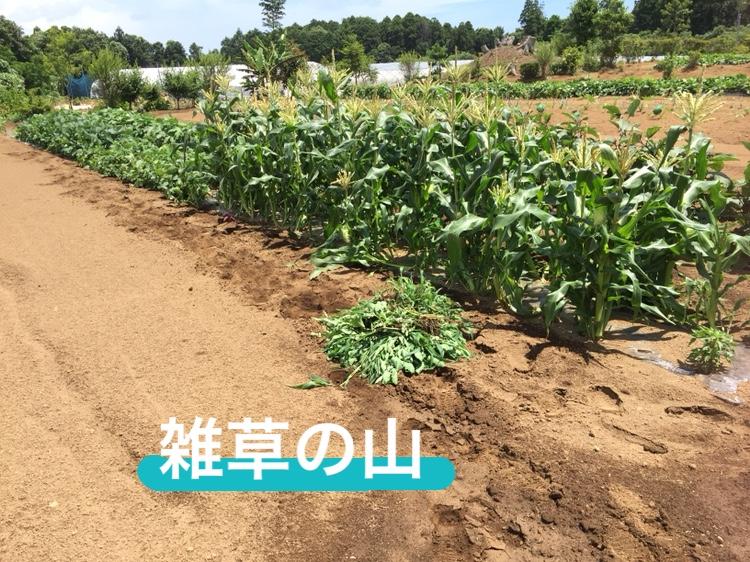 f:id:Yamanao:20180721230146j:plain