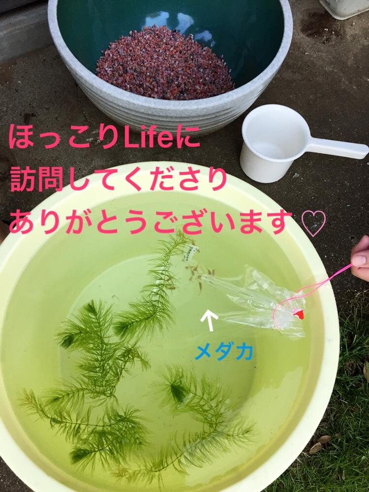 f:id:Yamanao:20180823170128j:plain