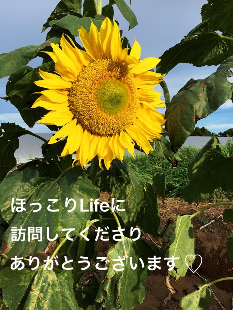 f:id:Yamanao:20180909141608j:plain