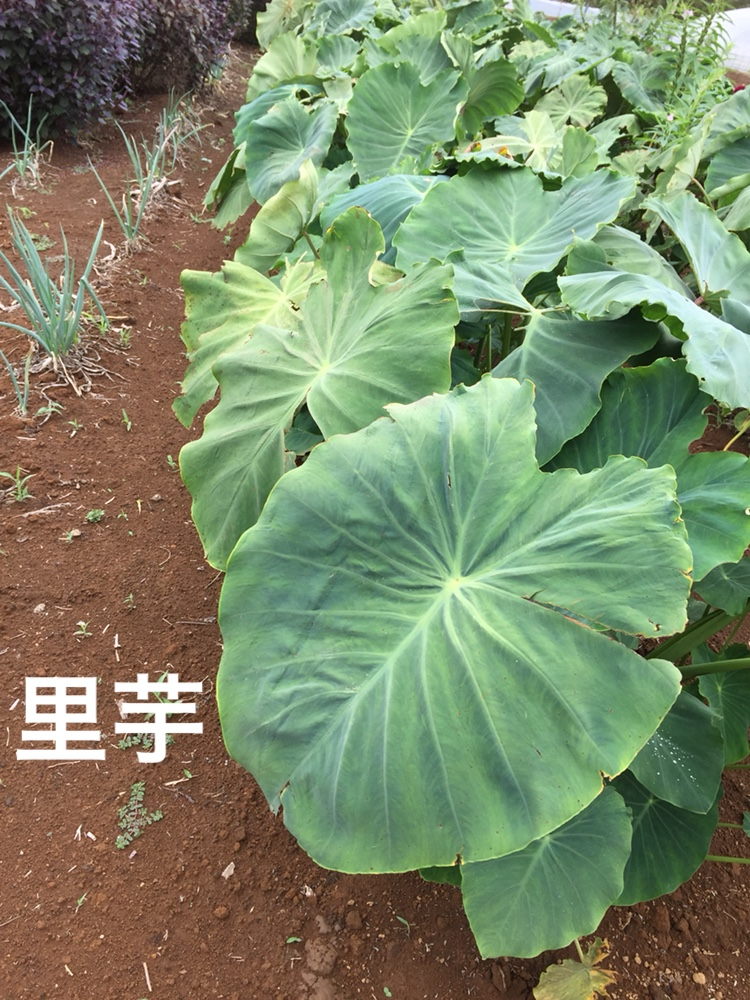 f:id:Yamanao:20180917085343j:plain