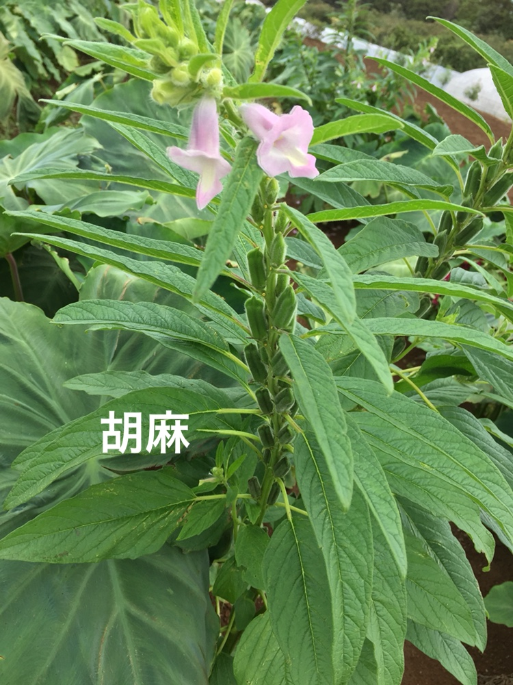 f:id:Yamanao:20180917085434j:plain