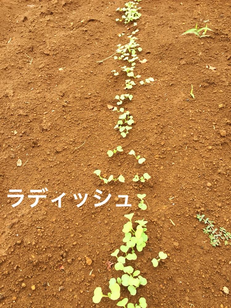 f:id:Yamanao:20180917085636j:plain