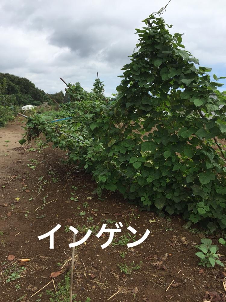 f:id:Yamanao:20180917085705j:plain