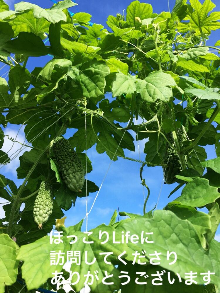 f:id:Yamanao:20180922163820j:plain