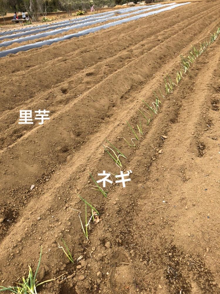 f:id:Yamanao:20190416220023j:plain