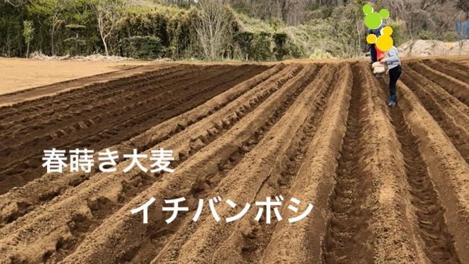 f:id:Yamanao:20190416223440j:plain