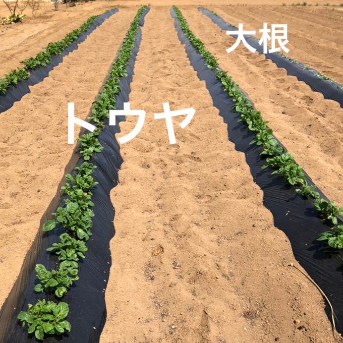 f:id:Yamanao:20190429141905j:plain
