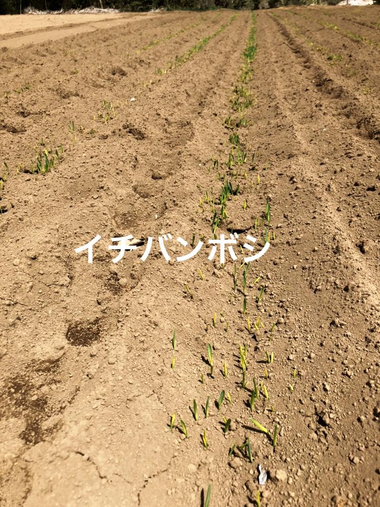 f:id:Yamanao:20190429141933j:plain