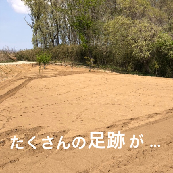 f:id:Yamanao:20190429151347j:plain