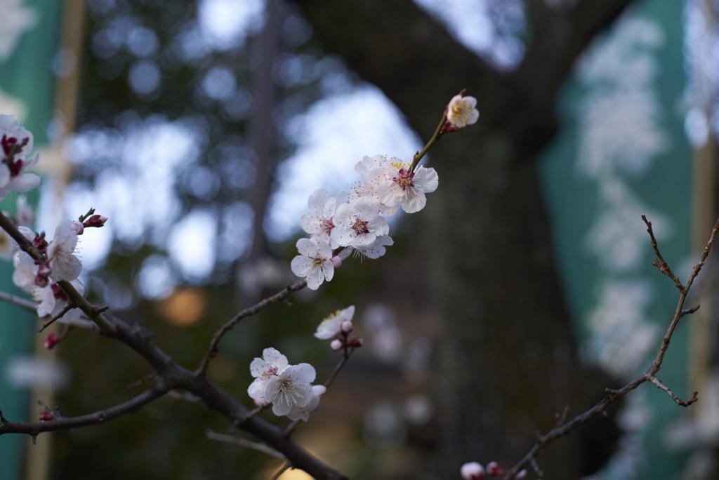 f:id:Yamatai:20170308093434j:plain