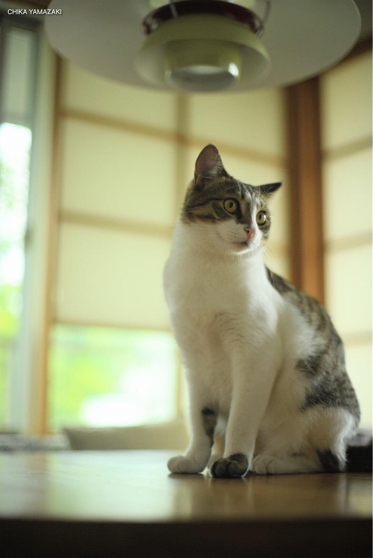 f:id:Yamazaki_puu:20200606065305j:image