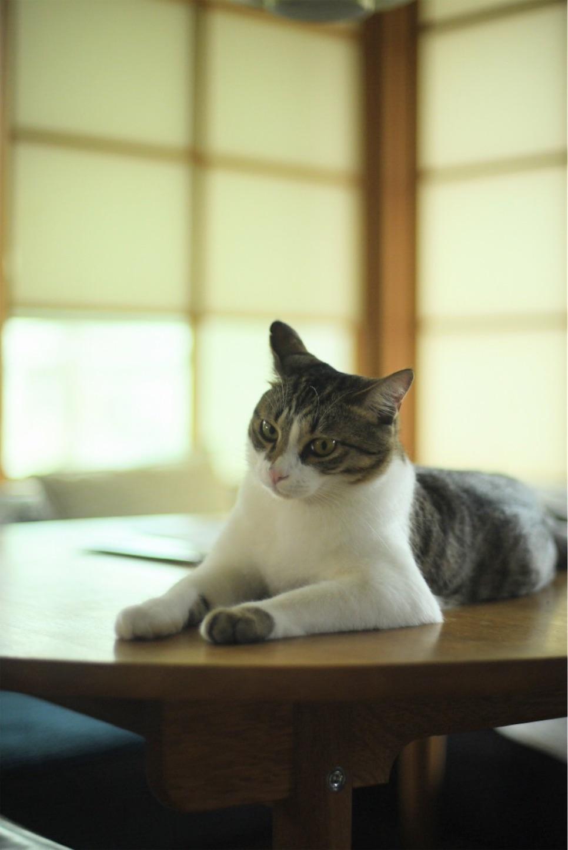 f:id:Yamazaki_puu:20200607075328j:image