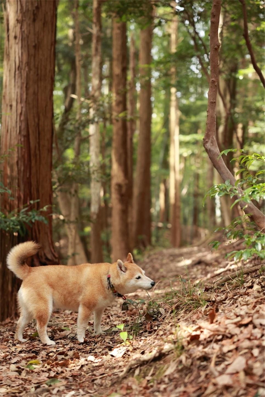 f:id:Yamazaki_puu:20210321183144j:image