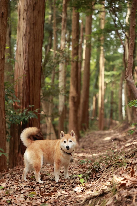f:id:Yamazaki_puu:20210321183151j:image