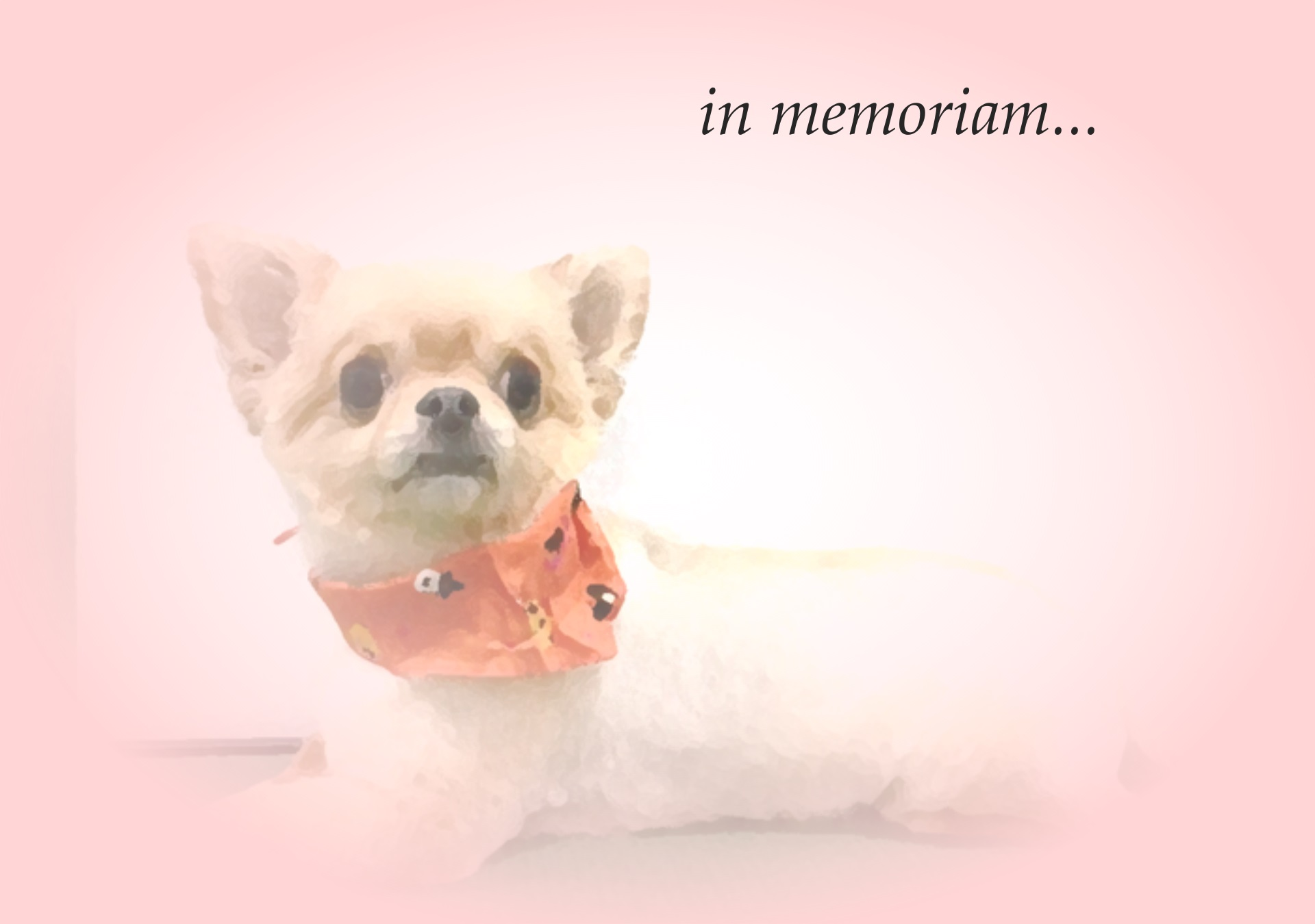in memoriam 愛犬を悼んで