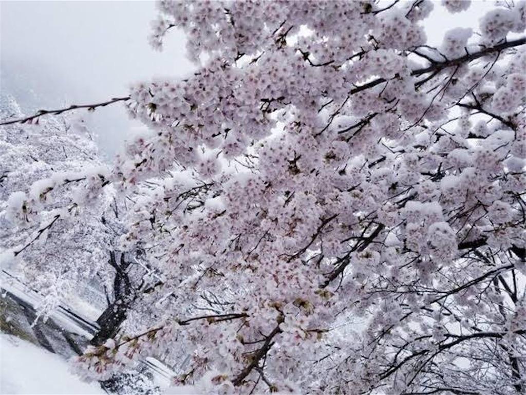 f:id:Yasumotomasatoshi:20190415235444j:image