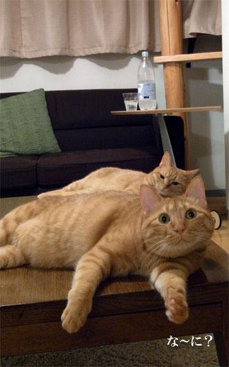 猫画像1_100729