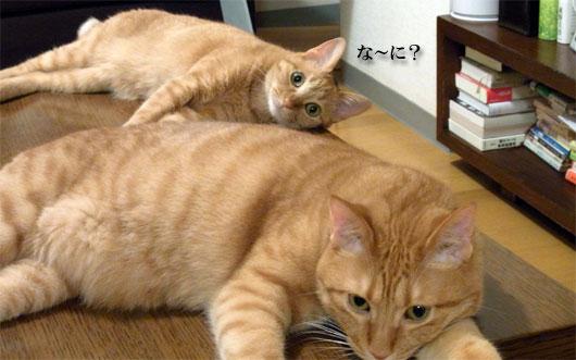猫画像2_100729