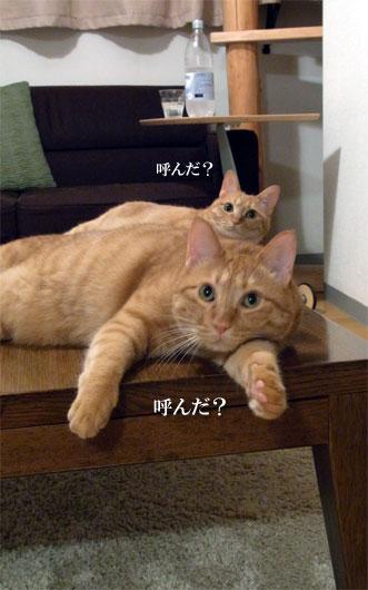 猫画像3_100729