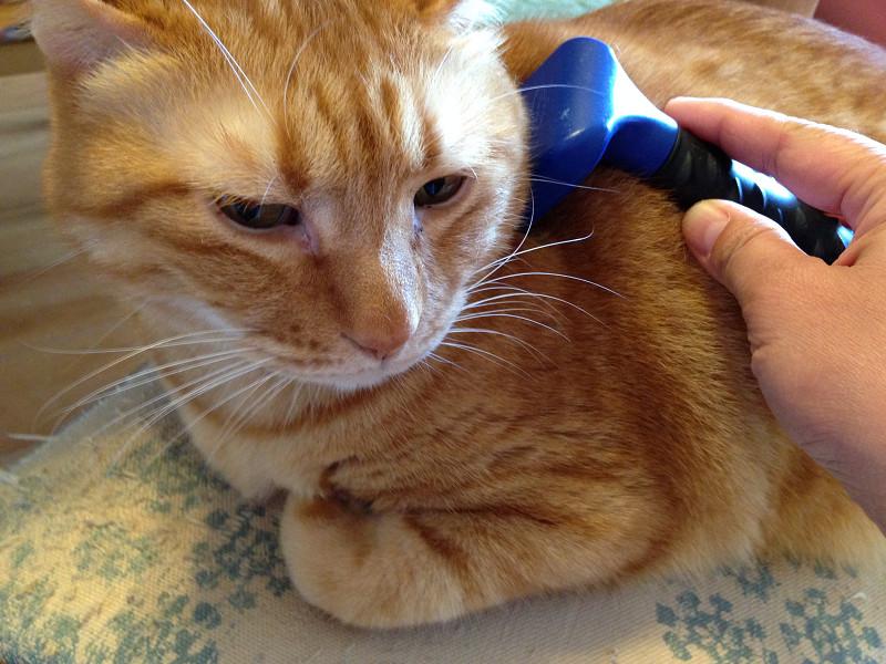 猫とファーミネーター