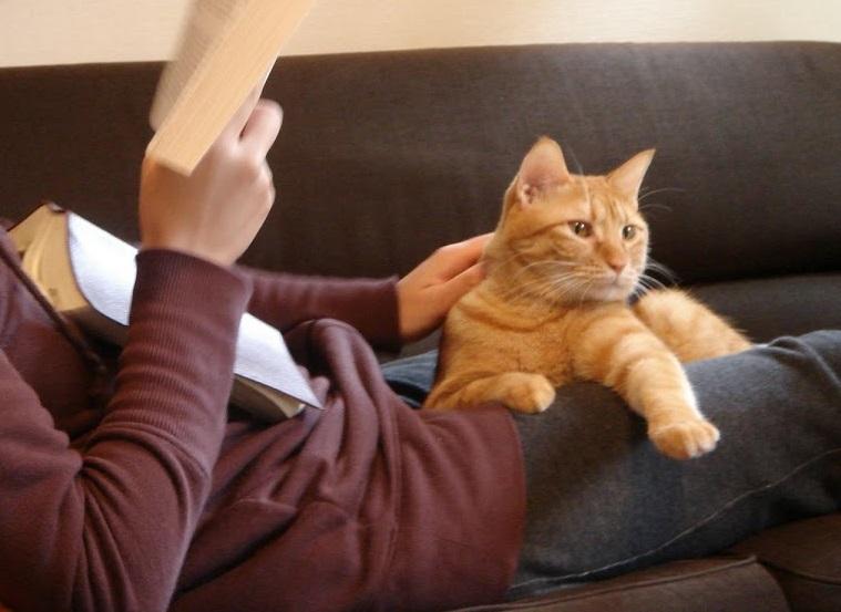 猫と暮らし始める