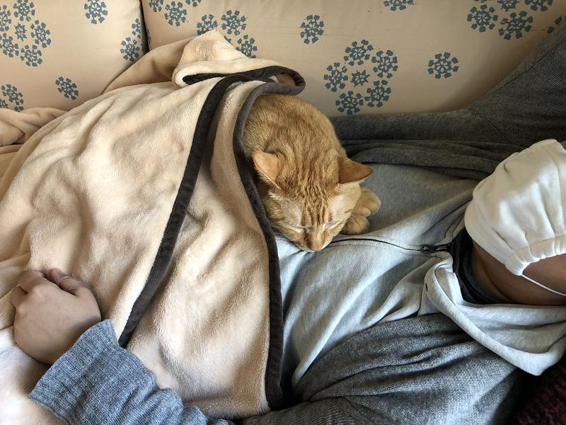 インフルエンザBでダウンし猫と寝込む