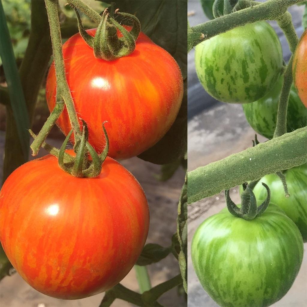 f:id:Yocos-farm:20160828210329j:image