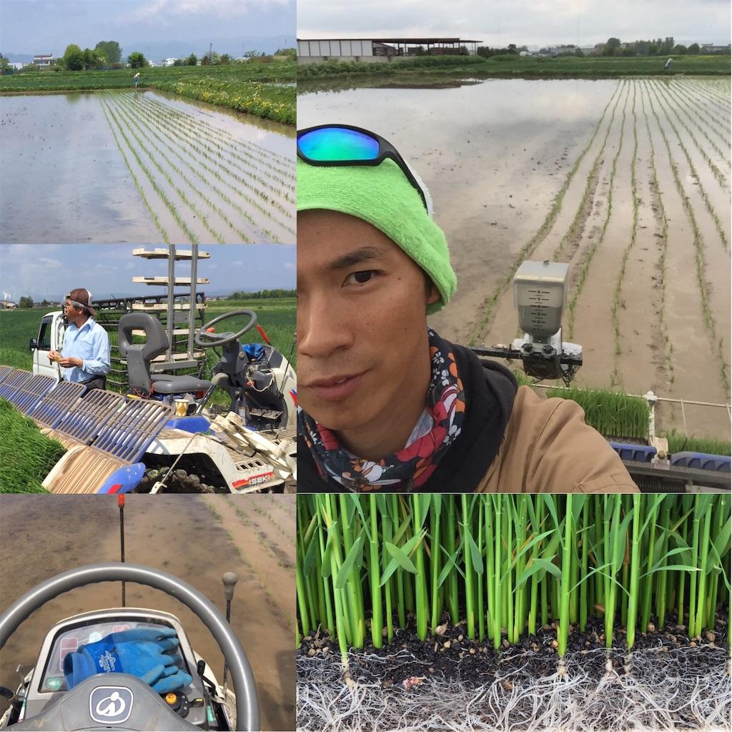 f:id:Yocos-farm:20170527155301j:image