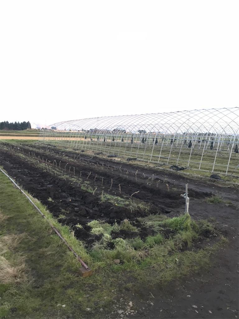 f:id:Yocos-farm:20181108233054j:image