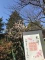 阿佐ヶ谷神明社320