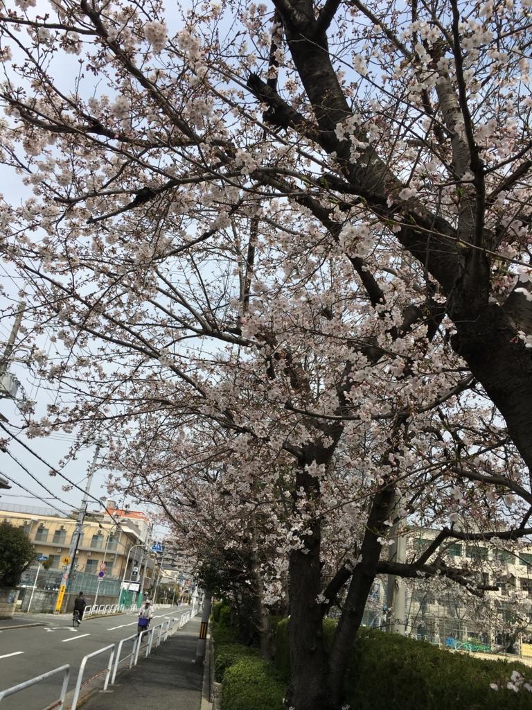 f:id:Yoshikochan:20170406015255j:plain