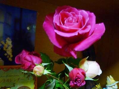 f:id:Yoshikoi:20111212215213j:image