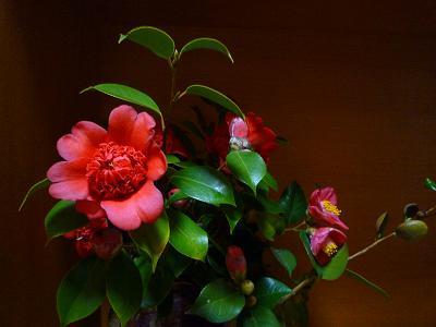 f:id:Yoshikoi:20120326191211j:image