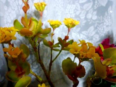 f:id:Yoshikoi:20130218201502j:image